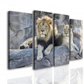 Multicanvas, Leul și leoaica stau pe piatră