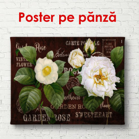 Poster, Bujori mari albi cu frunze verzi pe un fundal maro.