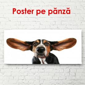 Poster, Câine pe un fundal alb