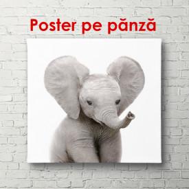 Poster, Elefantul pe fundalul alb