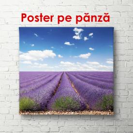 Poster, O zi frumoasă în câmpul de lavandă