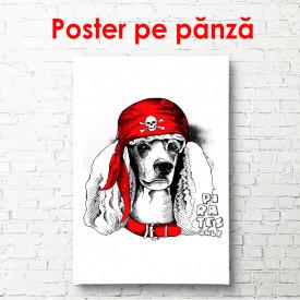 Poster, Poodle într-un capac roșu pe un fundal alb