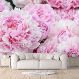 Fototapet, Bujori roz strălucitori 1