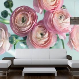 Fototapet, Bujori roz