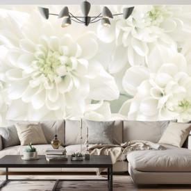 Fototapet, Crizanteme albe