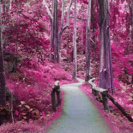 Fototapet, Pădurea roz