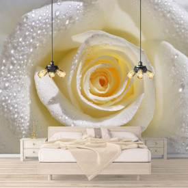 Fototapete 3D, Trandafir cu picături pe petale