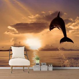 Fototapete cu delfini la apusul soarelui