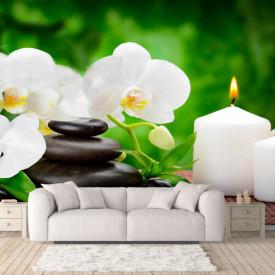 Fototapete cu o orhidee albă pe fundal verde.
