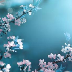 Fototapete, Flori albe pe o ramură pe un fundal albastru
