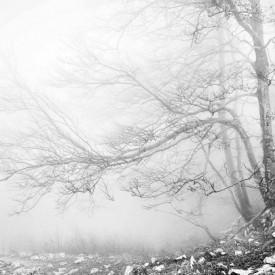 Fototapete Pădurea iarna