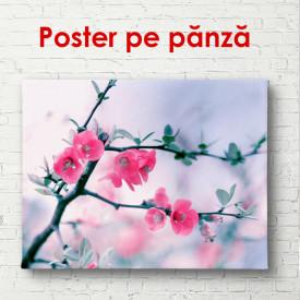 Poster, Crenguța cu flori roz pe un fond albastru