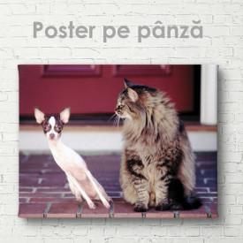 Poster, Pisica și câinele