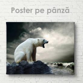 Poster, Urs polar