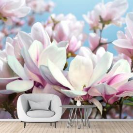 Fototapet 3D, Flori albe și roz pe fundalului cerului senin