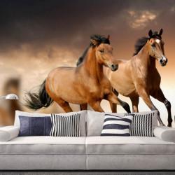 Fototapet, Galopul cailor