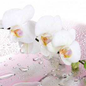 Fototapet, Orhidee albe și roua de dimineață
