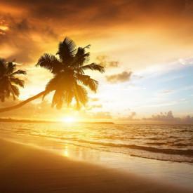 Fototapete, Palmieri pe malul mării