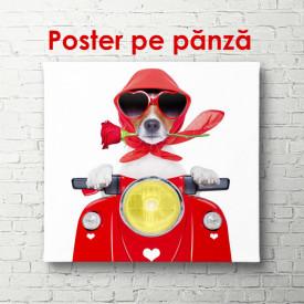 Poster, Câine care conduce un moped