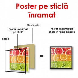 Poster, Citrice colorate