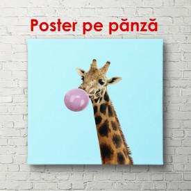 Poster, Girafă pe un fundal albastru