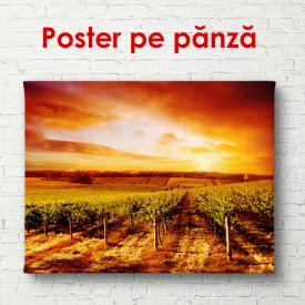 Poster, Podgoria la apusul