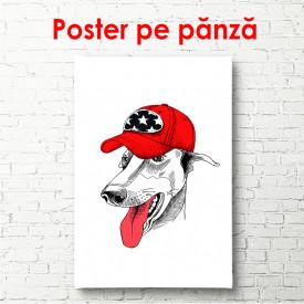 Poster, Un câine alb cu o șapcă roșie