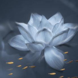 Tablou modular, Floare de lotus albastră delicată