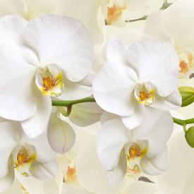 Tablou modular, Orhidee albă pe fundal bej.