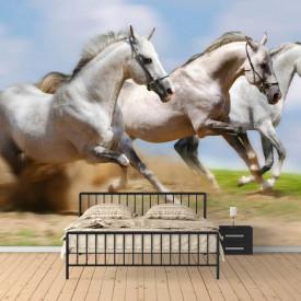 Fototapet, Cai albi pe fundalul cerului