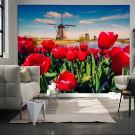 Fototapet Flori si Plante, Lalele rosii pe fundalul morii