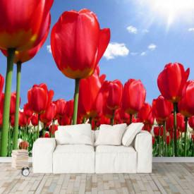Fototapet Flori si Plante, Lalele roșii și cerul senin