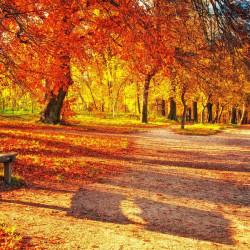Fototapet Natura, Peisaje, Toamnă de aur