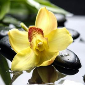 Fototapet, O floare pe niște pietre negre