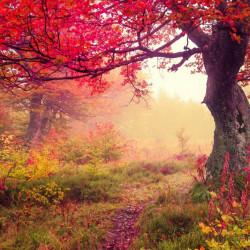 Fototapet O pădure toamna