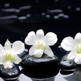 Fototapet, Pietre negre și flori albe