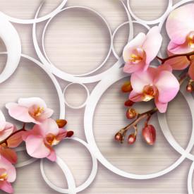 Fototapete 3D, Orhidee roz și cercuri pe un fundal bej