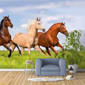 Fototapete,Alergarea cailor pe iarba verde