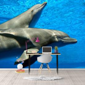 Fototapete, Delfinii frumoși în apă