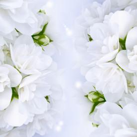 Fototapete, Flori albe de primăvară albe