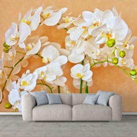 Fototapete, Orhidei albe pe un fundal bej