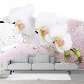 Fototapete, Orhidei albe și roua de dimineață