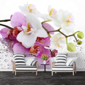Fototapete, Orhidei și roua de dimineață