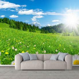 Fototapete, Răsăritul soarelui într-un câmp cu romanițe