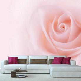 Fototapete, Trandafir roz delicat