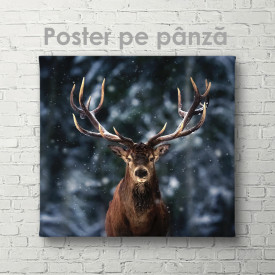Poster, Cerb