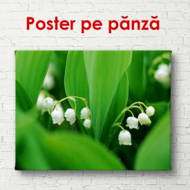 Poster, Flori albe de primăvara
