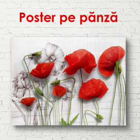 Poster, Maci roz pe un perete gri