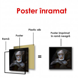 Poster, Maimuță pe un fundal negru