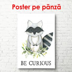 Poster, Raton pe fundal alb